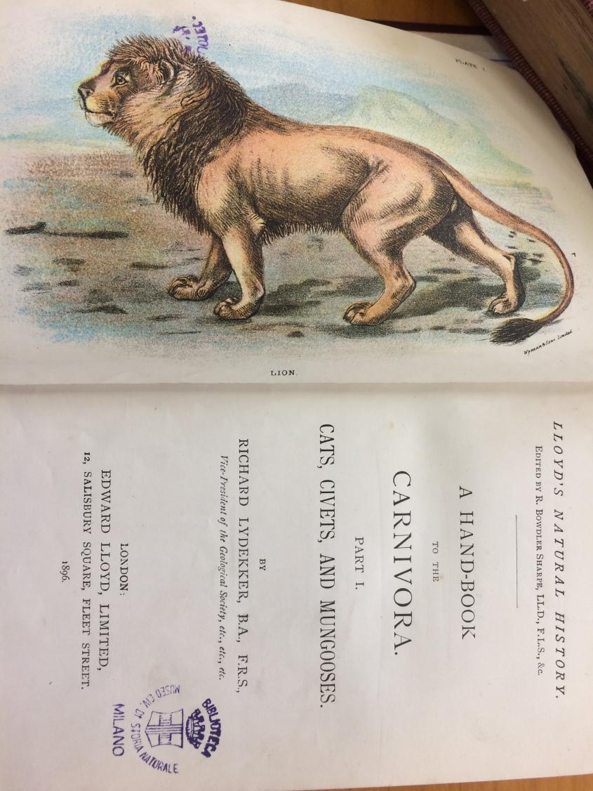 handbook_carnivora