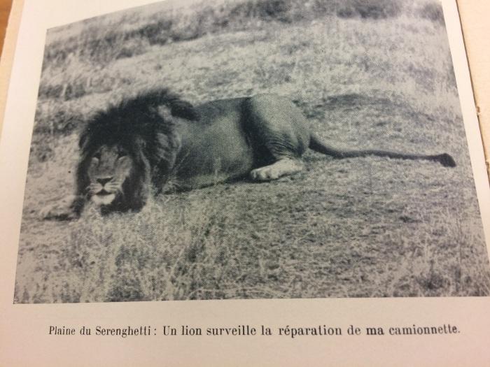 leone_maschio_serengeti