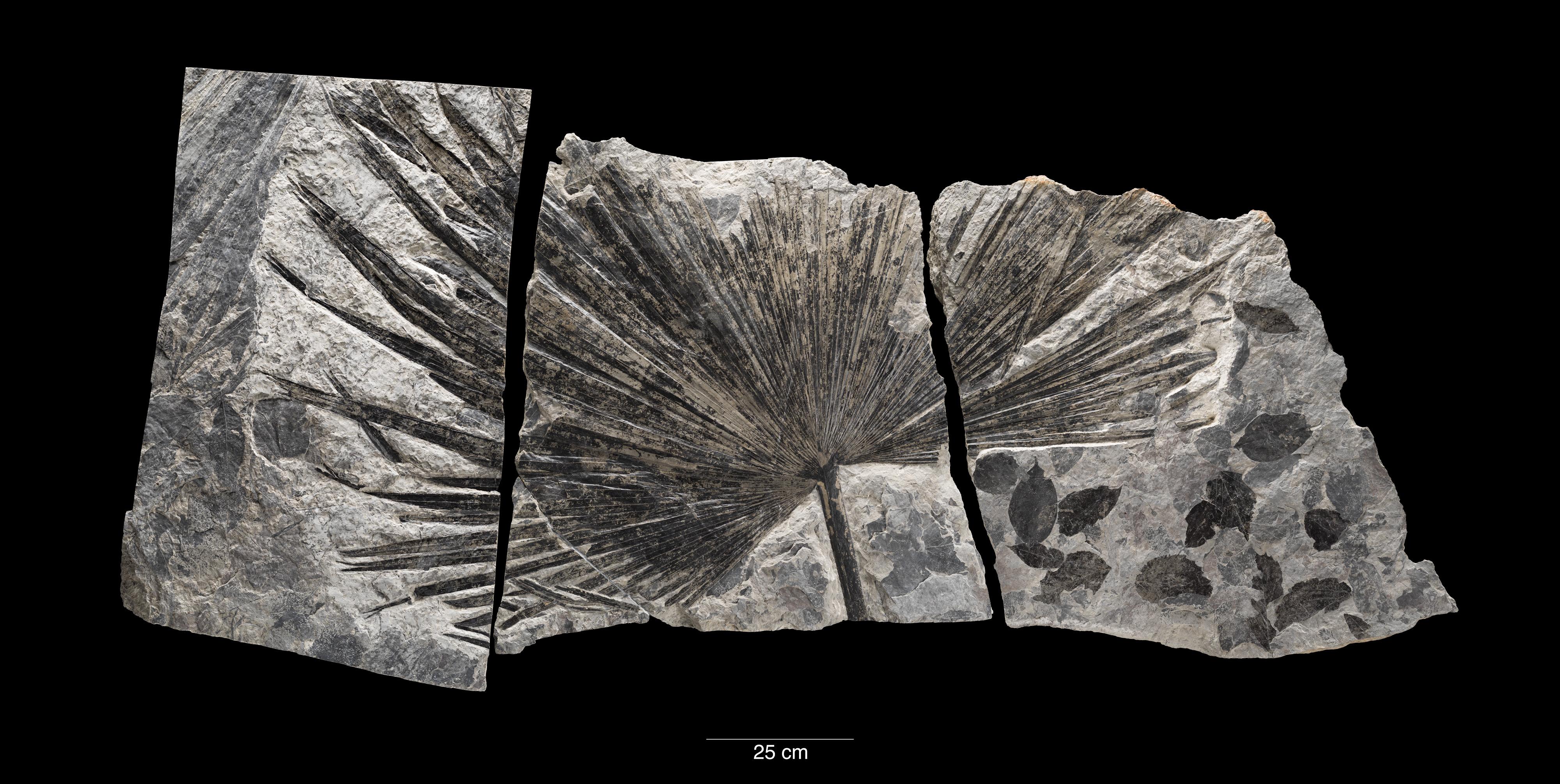 Fossile di datazione ragionamento circolare