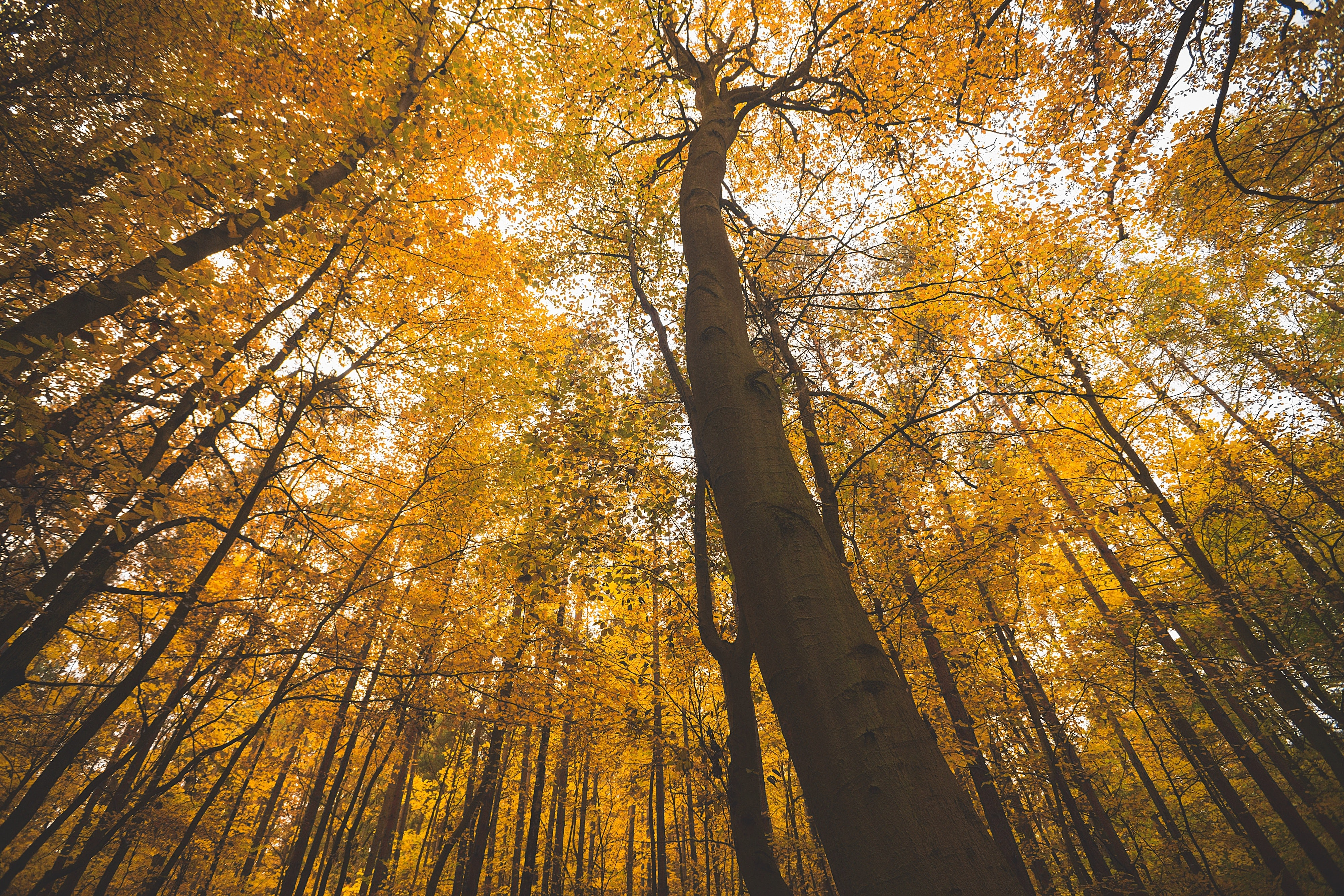 autumn-branches-fall-forest-235798